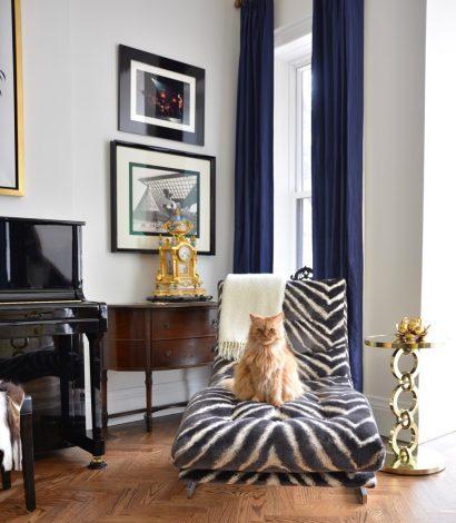 cozy living room with zebra decor sofa and a cat