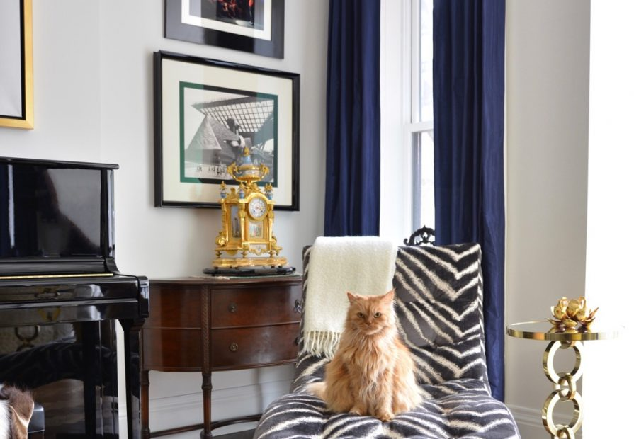 cozy living room with zebra decor sofa and a cat